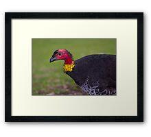 Australian Brush-turkey Framed Print