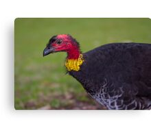 Australian Brush-turkey Canvas Print