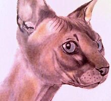 Sphynx Cat by DianeL