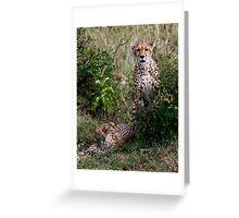 Cheetahs Greeting Card