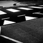 black cat crossing by Dorit