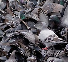 Pigeon Pileup  by Moonlake