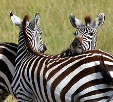 Zebra friends by Keith Davey
