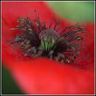 Poppy by ReidOriginals