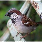 Little Bird by ReidOriginals