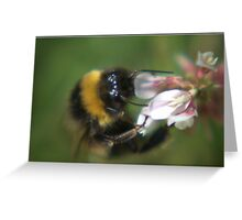 Bumble Bee In Clover Greeting Card