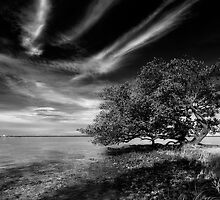redfish point by james smith