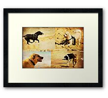 Canine Adventures Framed Print