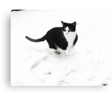 Pawprints in the snow II Canvas Print