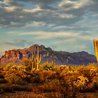 The Desert Golden Hour by Saija  Lehtonen