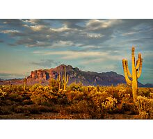 The Desert Golden Hour Photographic Print