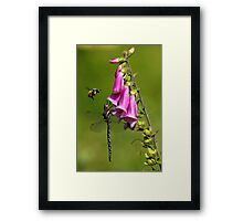 Bee-ware the Dragon Framed Print