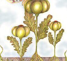 St John's Thistle Garlick by Helena Wilsen - Saunders