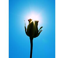 Kissed By The Sun Photographic Print