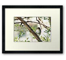 Bird collecting nest materials Framed Print
