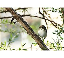 Bird collecting nest materials Photographic Print