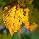 PILLOWMANIA - Leaf Light by Aritheeagle