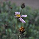 Flower 1 by meadythebrave