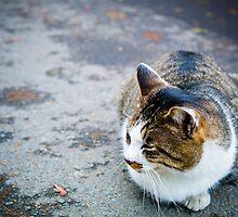 Bouncy Fat Cat 貓 - Otaru 小樽 , Hokkaido 北海道 by sxhuang818