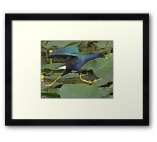 Flash of Purple Framed Print