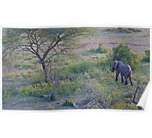 African Elephant from a hot-air balloon Poster