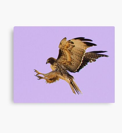 062611 Red Tailed Hawk Canvas Print