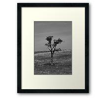 Prairie Tree Framed Print