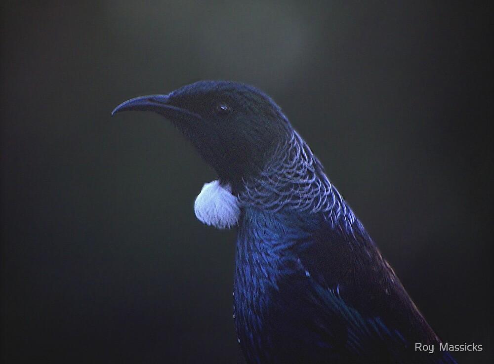 The dark Assassin.....! by Roy  Massicks
