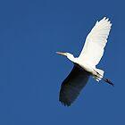 Bold White Egret by Starsania