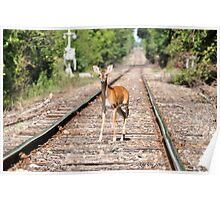 Deer on the Tracks Poster