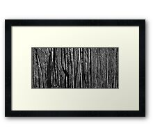 Untitled- Mt Sterling Trees Framed Print