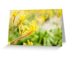 Anigozanthos Greeting Card