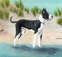 Great Dane Dog Beach Dunes Cathy Peek by Cathy Peek