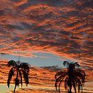 Sunset by TheaShutterbug
