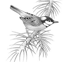 Great Titmouse by Simon Harris