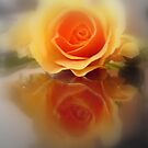 ROSE  REFLECTION by Heidi Mooney-Hill
