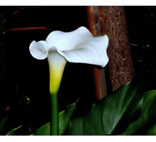 Lily of the lamplight Photographic Print