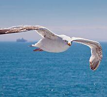 Cross Channel Birdie by Krys Bailey