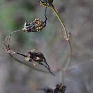 Flower 2 by meadythebrave