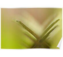 Venus Flytrap close-up Poster
