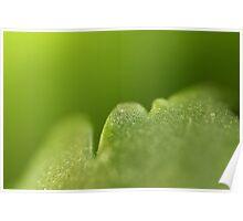 Kalanchoe plant leaf macro Poster
