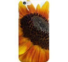 sun flower macro iPhone Case/Skin