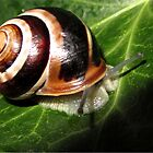 snail by Enri-Art