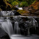 How About That ~ Sweet Creek ~ by Charles & Patricia   Harkins ~ Picture Oregon