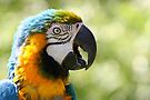 I'm Wonderful - Blue-and-yellow Macaw by Jo Nijenhuis
