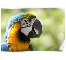 I'm Wonderful - Blue-and-yellow Macaw Poster