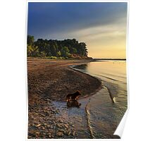 Red Dog Sunset Poster