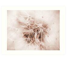 Dandelion Seedhead Art Print