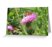 Peck's Skipper on Thistle Greeting Card