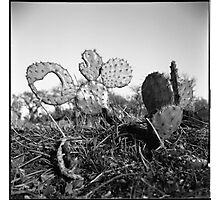 A Heart From A Cactus Photographic Print
